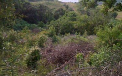 Land at Caribbean Park